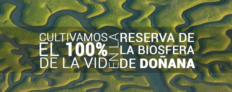Cultivamos nuestra vid en Doñana